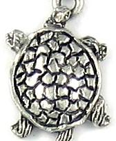 C193_turtle